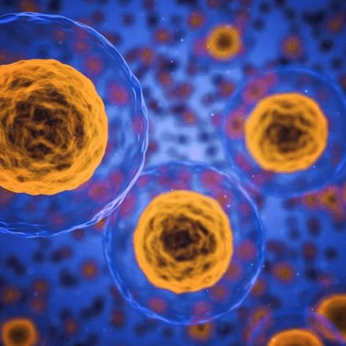 Stammzellenspende – Häufig gestellte Fragen